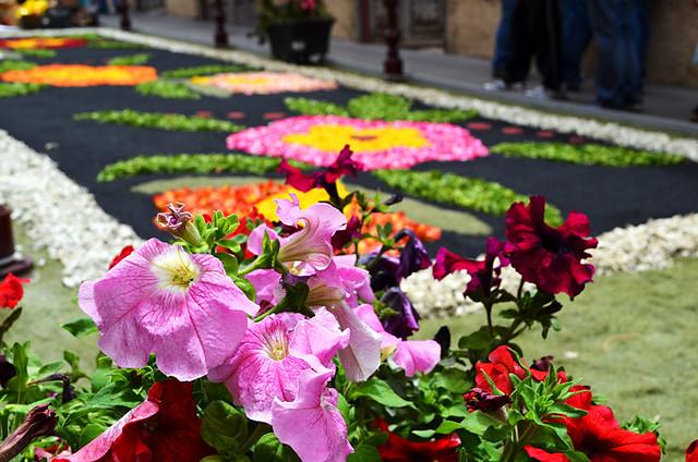 Flowers, Corpus Christi, Flower Carpets, La Orotava, Tenerife