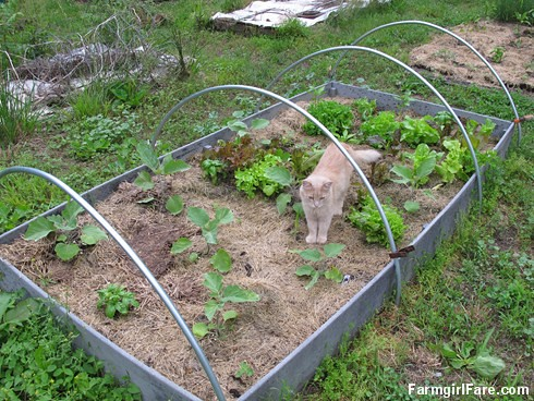 how to keep rodents out of your vegetable garden