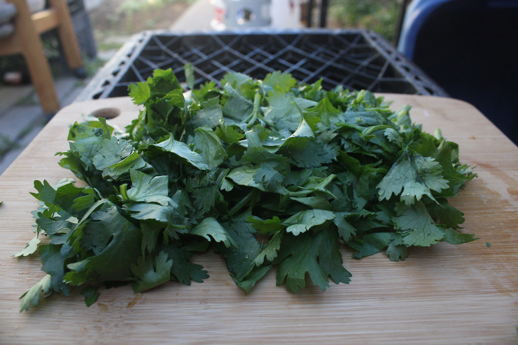 coriander leaf dried, spices