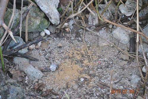 民眾提供墾丁國家公園區域內餌料陷阱。