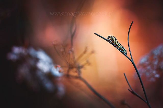 Sleeping Beauty - Mindblowing Macro Photography