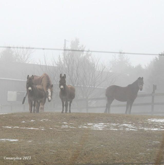 Horses in Mist