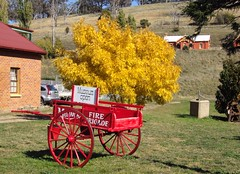 Museum at Carcoar New South Wales. Red cart and yellow autumn tree and orange railway station in the background.