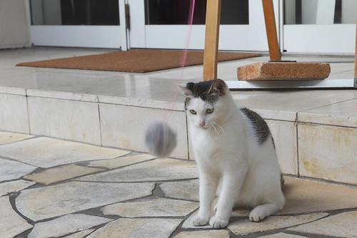 Play with Naha Cat 那覇猫と遊ぶ - 無料写真検索fotoq