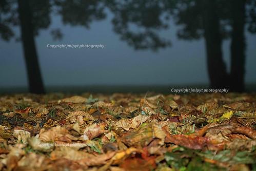 autumn hot color tree leave yellow fog jaune automne canon photography leaf horizon arbre brouillard couleur feuille chaude