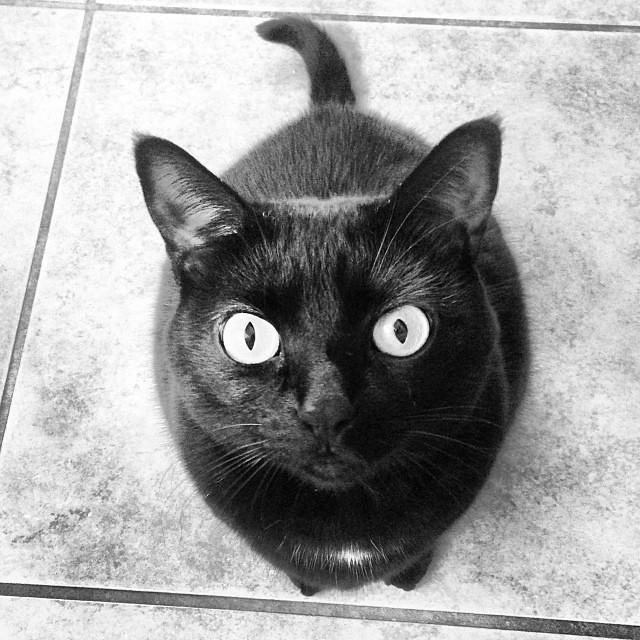 Black cat. In black and white.