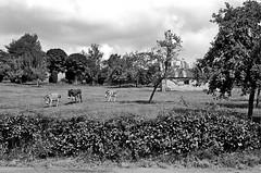 Donkeys - Photo of Montbray