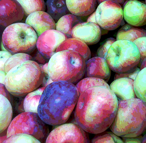 Apples at Russell's Orchard (Posterized Photo) by randubnick