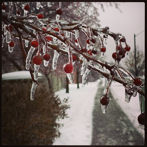 Freezing rain is treacherous and beautiful at the same time.