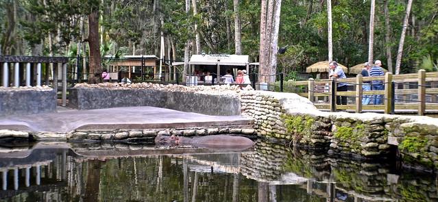Homosassa Springs, Florida - Hippo