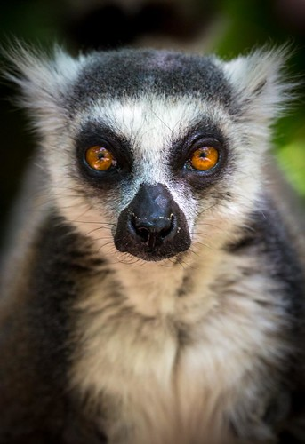 Face to face with a lemur. Road-Trip-Madagascar.