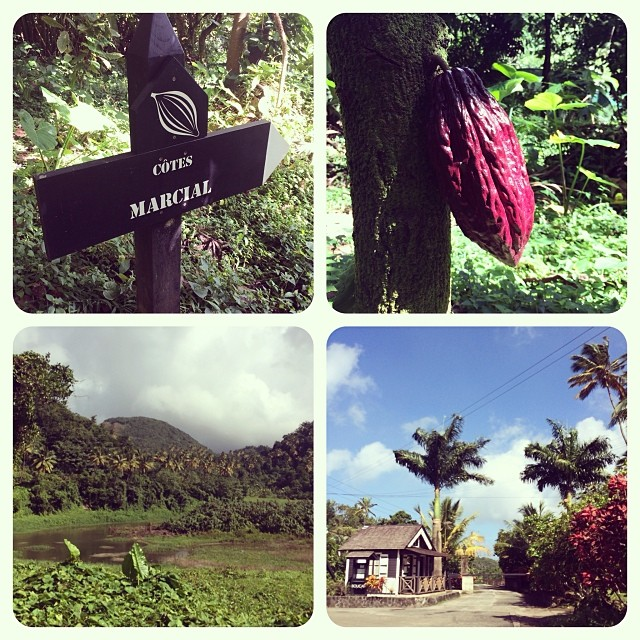 Hotel Chocolate cocoa fields in St Lucia