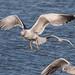 Edg_Res_Birds-16.jpg