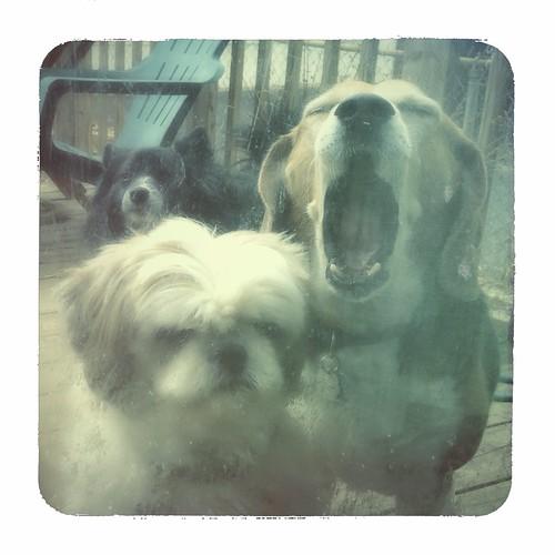 Yawn. by scoodog / Tom Myler