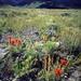Goshute Peak BLM WSA by kurtkuznicki1