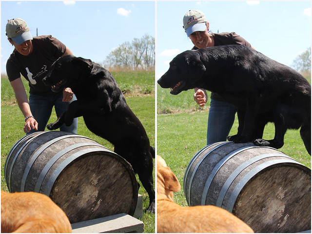 winery-agility-course-3