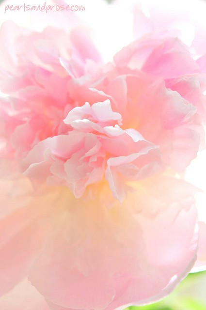 pink_chiffon_vertiz_web