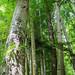 Arbres gravés dans une forêt, Sinaia, Roumanie by Myrabella_plus