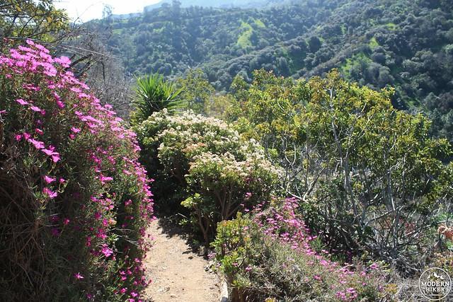 img_0184 - Amirs Garden