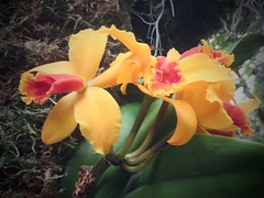 MoBot Orchid 2015-058