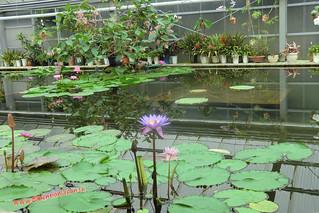CIMG1127 Cultivo de plantas que levantan niños, Infierno Umi Jigoku (Beppu) 13-07-2010 copia