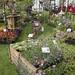Jardin Bonheur 2016