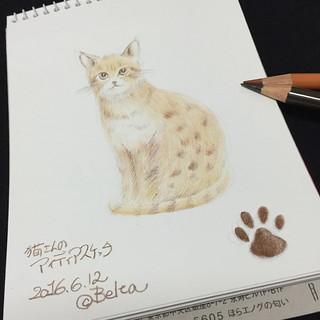 2016_06_12_cat_01