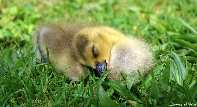 Shhh...baby sleeping