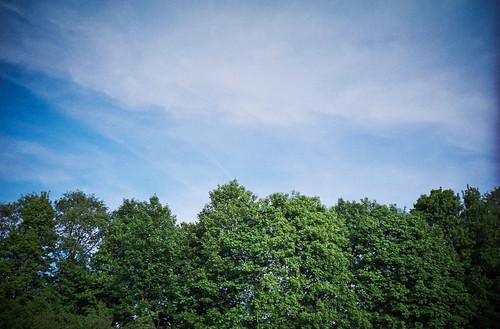 above sky cloud sun white color tree green film nature contrast analog landscape outside diy lomo lca fuji bright bluesky scan line epson 28 135 vignette divided fujisuperia200 32mm c41 v700 tetenal colortec lomokompaktautomat