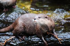Woodland Park Zoo >:D
