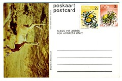 1980-06-18 SWA Postcard Steenbuck - Unsent (1200)
