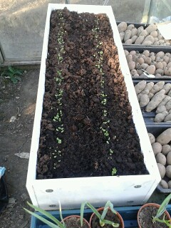mini raised bed May 13