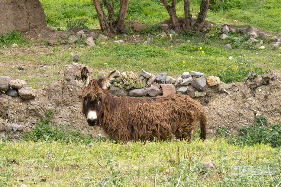 A scruffy looking donkey was keeping a close eye on us.