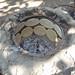 Making Huave tortillas in a jar oven - haciendo memelas en olla; San Mateo del Mar, Región Istmo, Oaxaca, Mexico por Lon&Queta