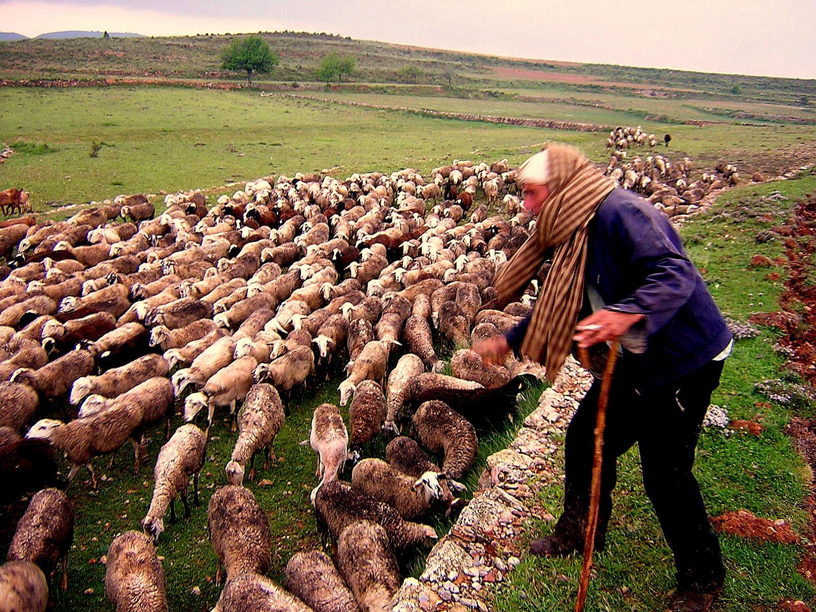 Pastor arreando al ganado. Autor, Gárgoris