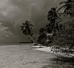 Saona Island D.R.