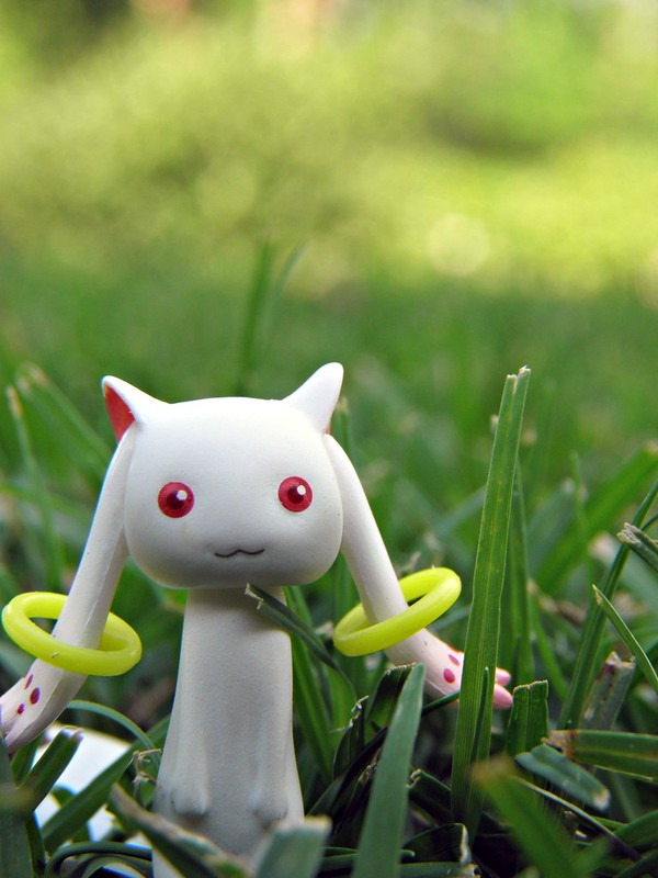 wild kyubey appeared