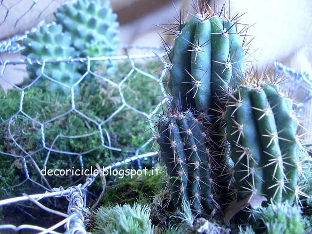 teiera e tazza cactus 6