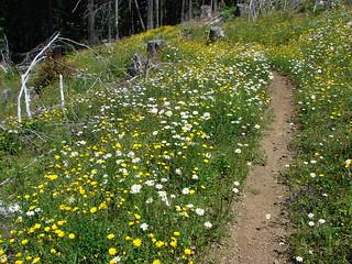 Tarabell Trail