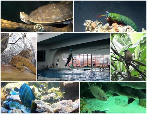 Aquarium_Ellie
