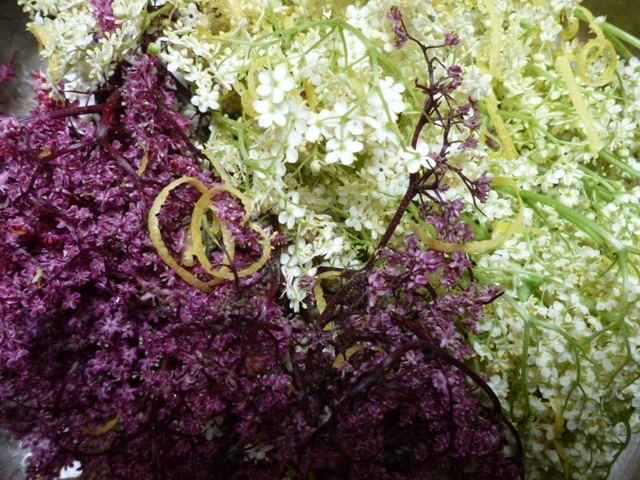 Pink and white elderflowers