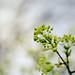 IMG_5541.jpg by yoshiffles