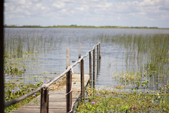 Iberá Wetlands, Carlos Pellegrini