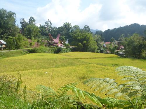 Sulawesi13-Palopo-Rantepao (7)
