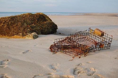 beach rock bay nikon d crab cage boulder corporation cape 40 algae cod trap howe crabtrap d40 mygearandme mygearandmepremium jtleagles