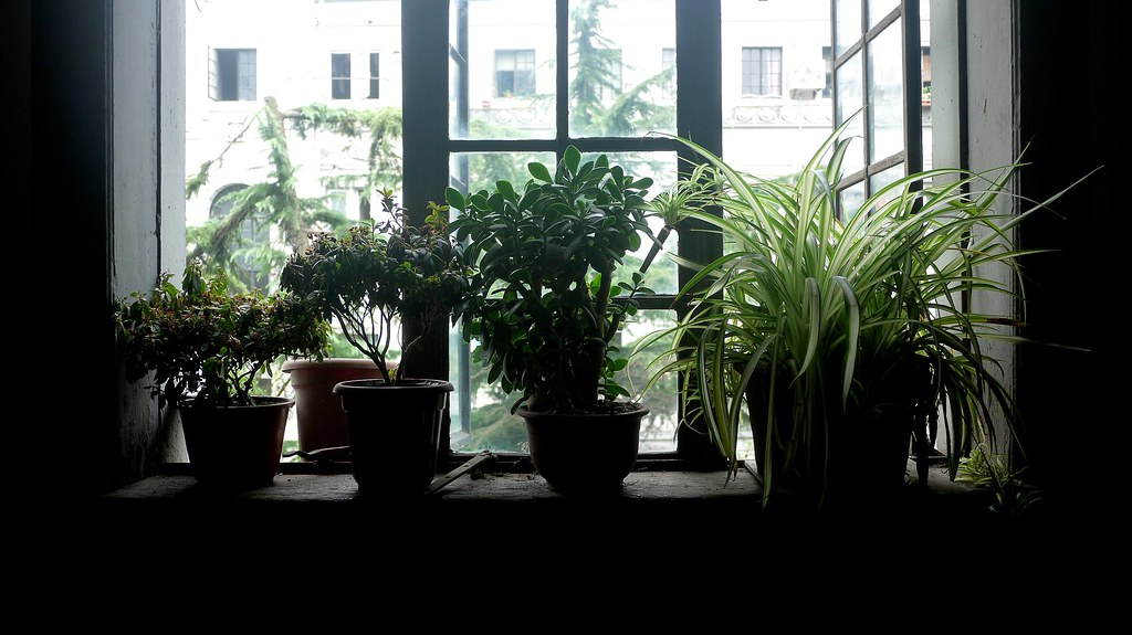 Window Greenery