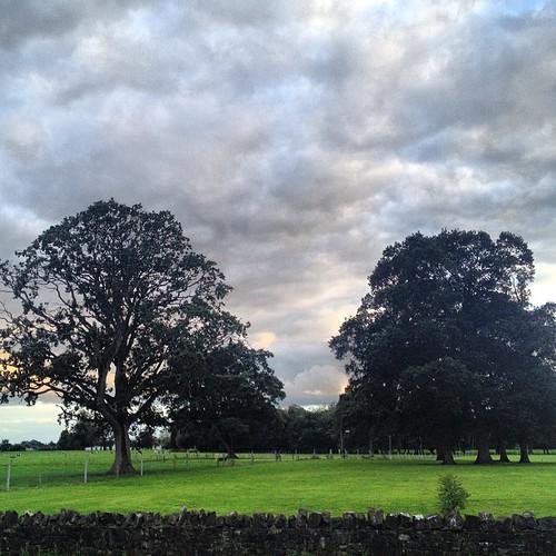 Trees & green fields.
