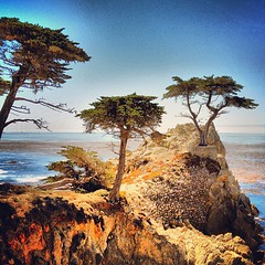 This image not for sale. #lone #cypress #hdr
