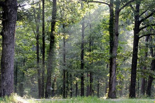 trees mist nature forest woods arkansas jonesboro