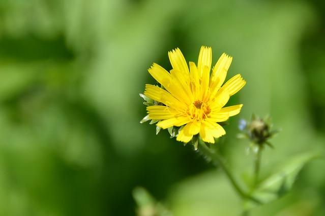 Flor amarilla en el campo